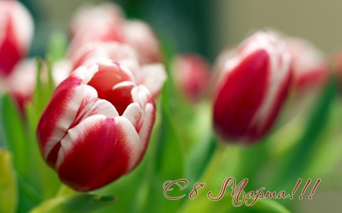 Тюльпаны сверху 0 марта