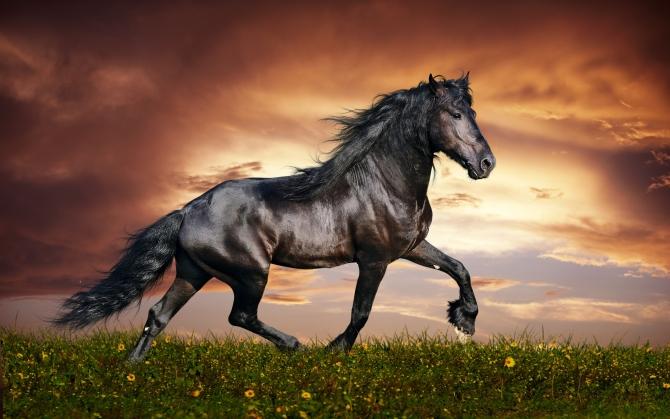 Арабский конь