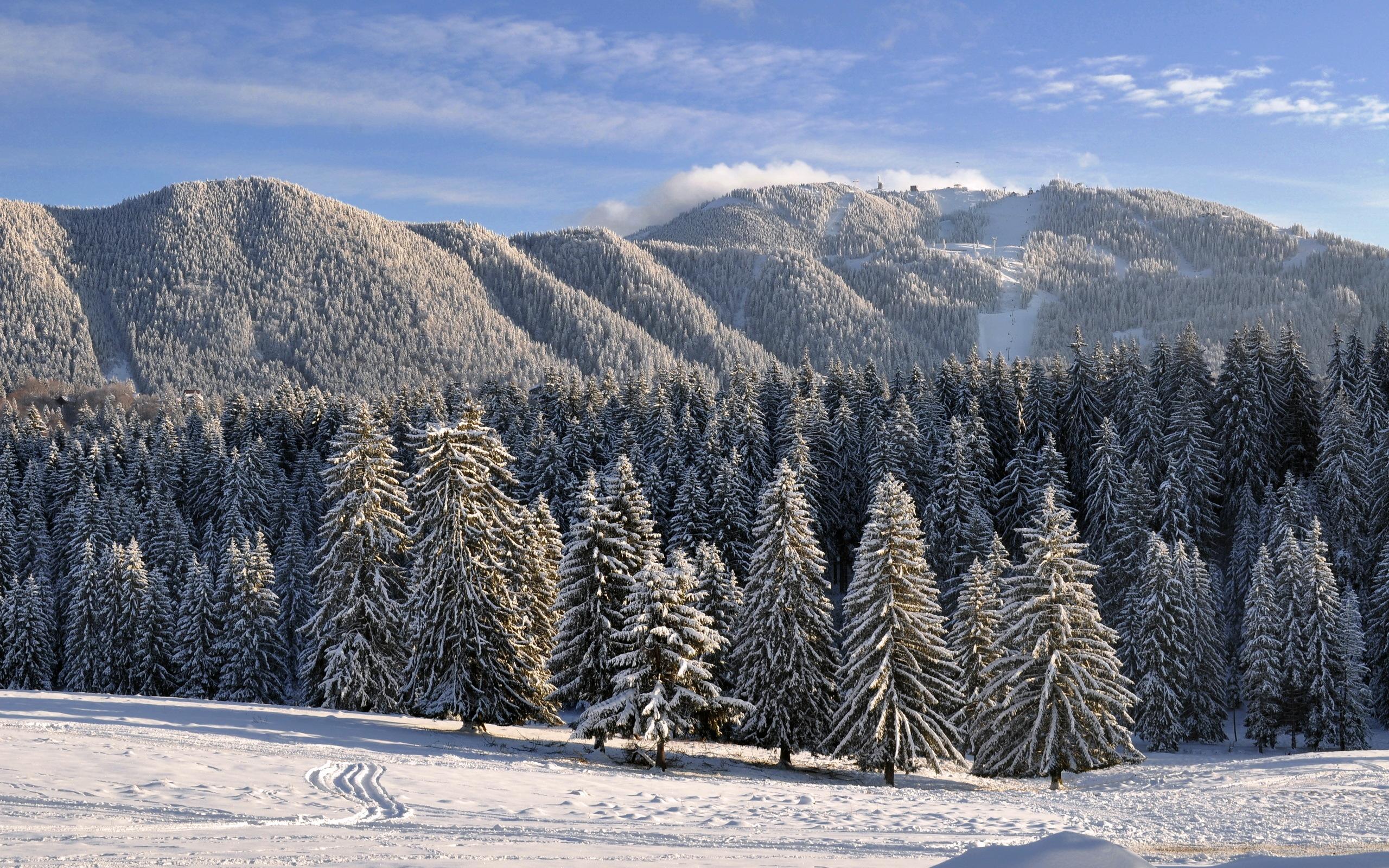 зимний лес картинку