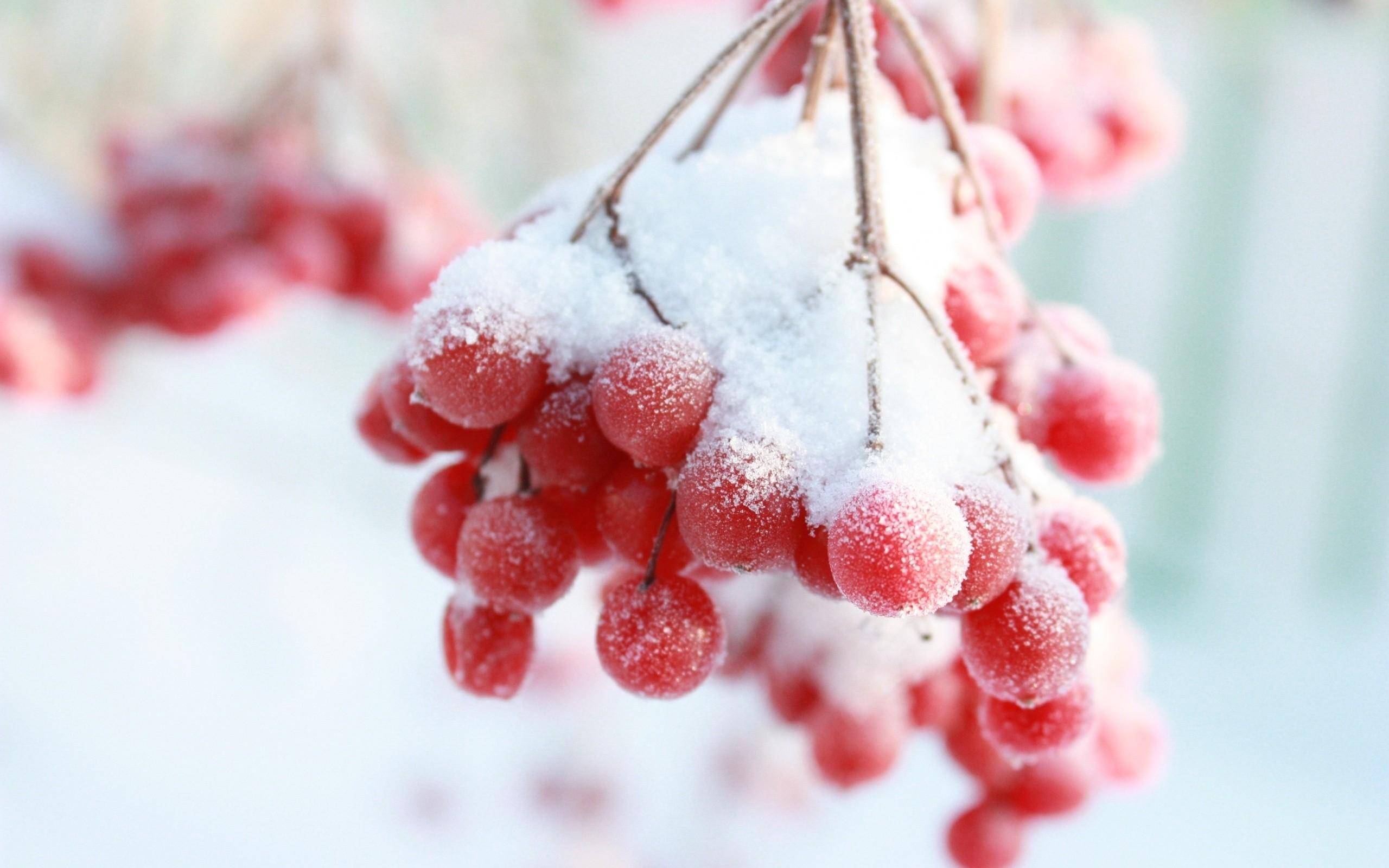 Рябина в снегу фото 553-180
