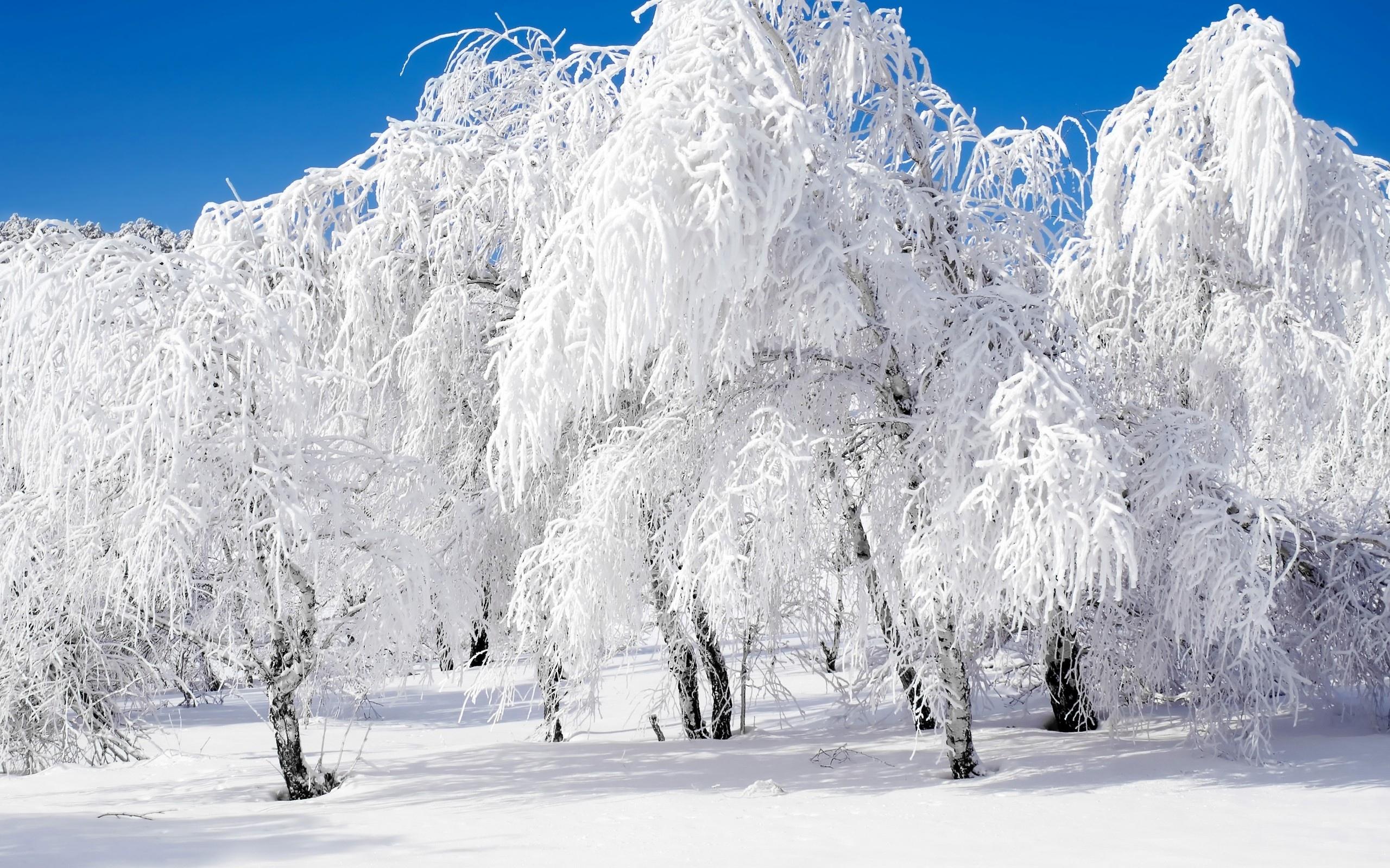 зима фото елки
