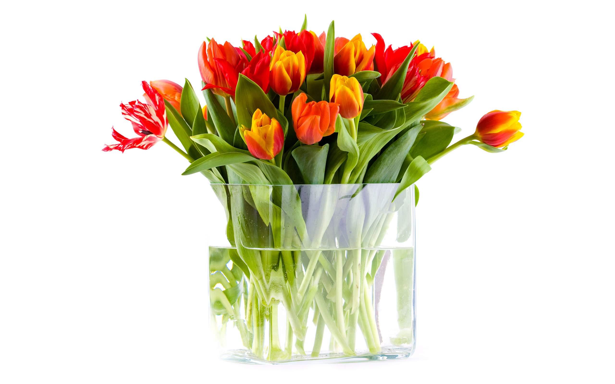 Доставка цветов в спб пан тюльпан цветы почтой с бесплатной доставкой