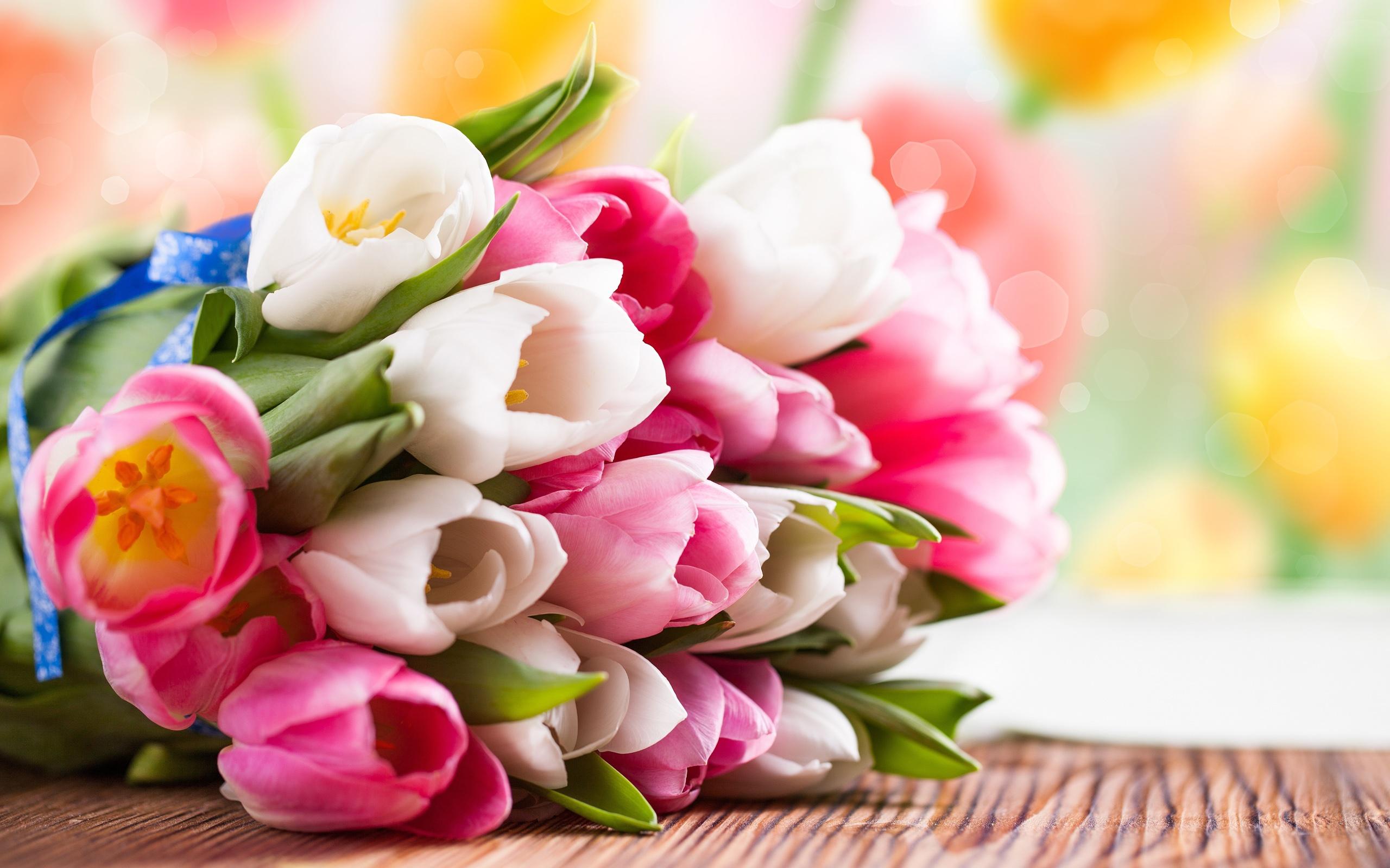фото тюльпанов: