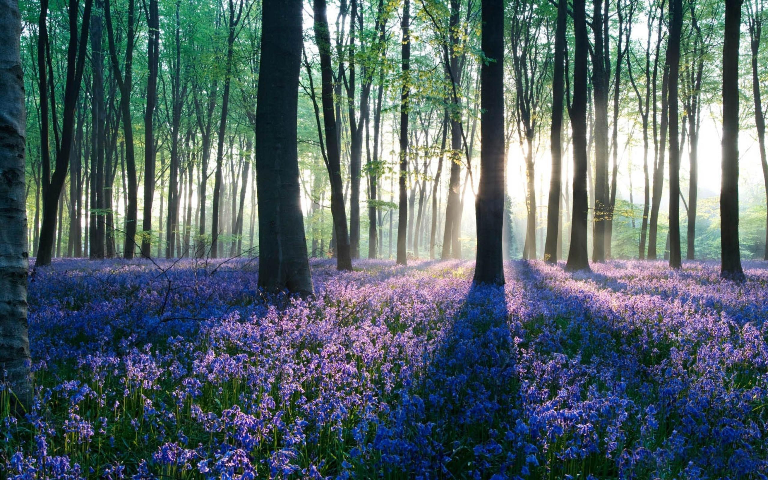 цветы в лесу фото: