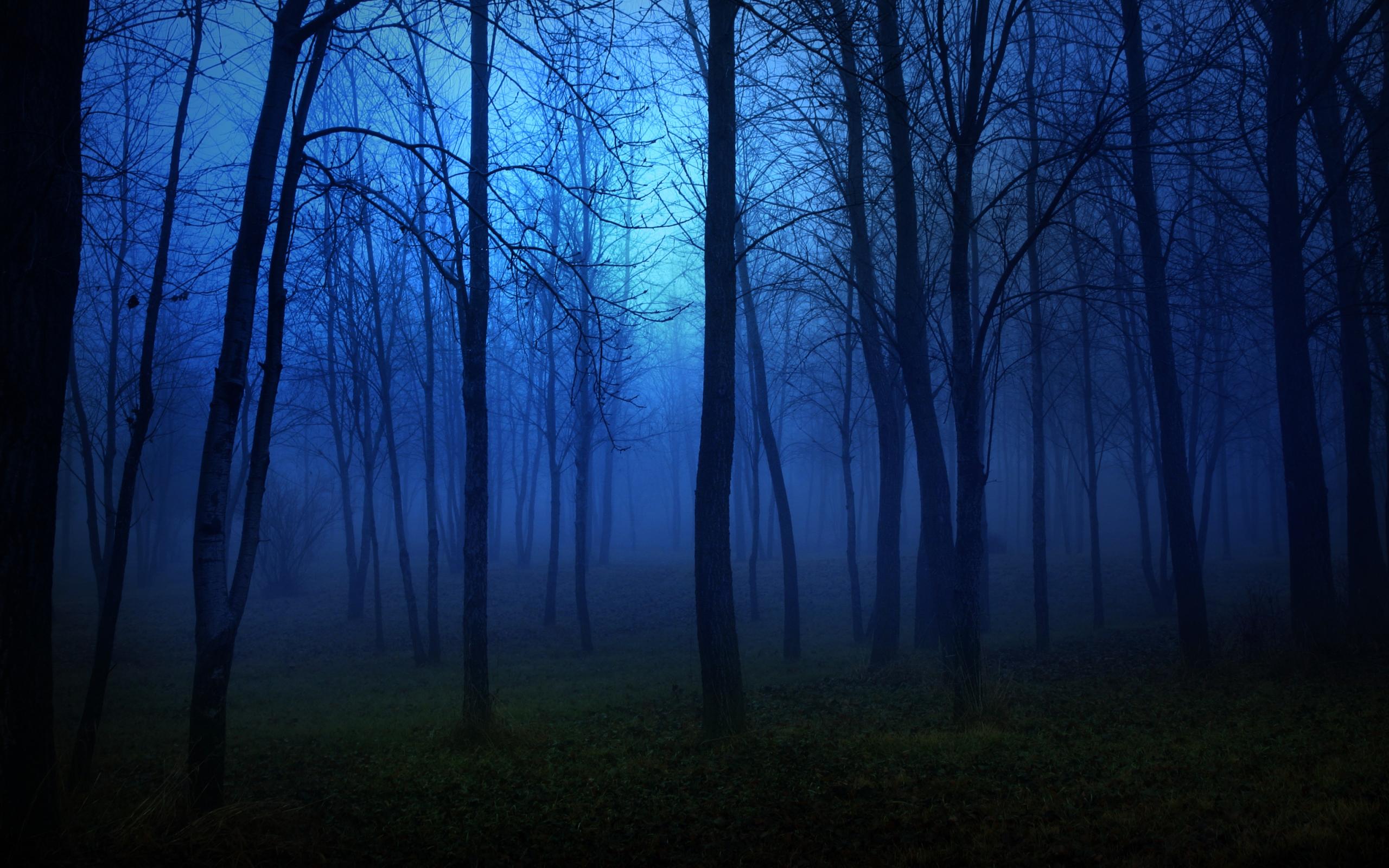 картинки лес ночью