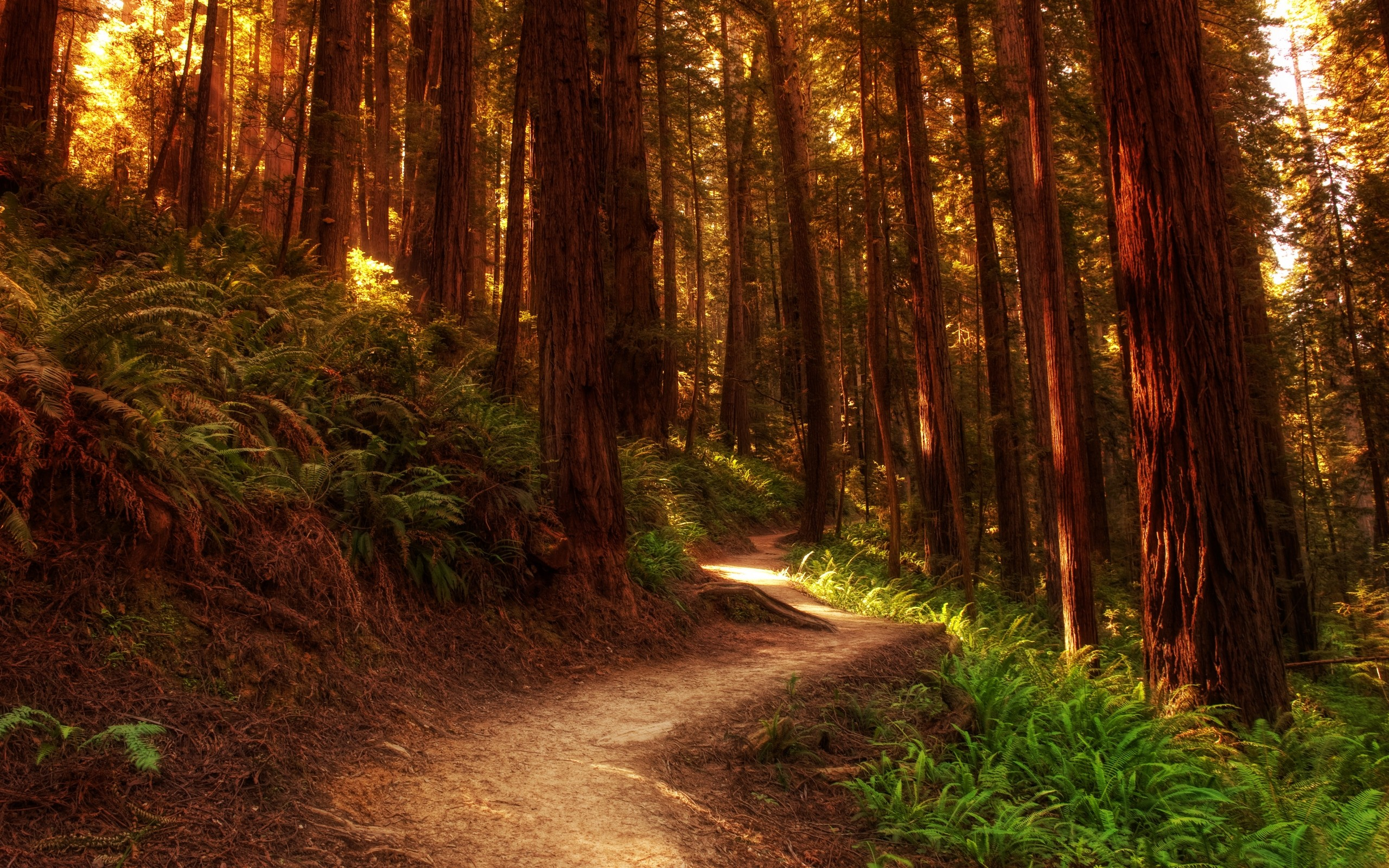 Красивый лес обои для рабочего стола картинки и фото