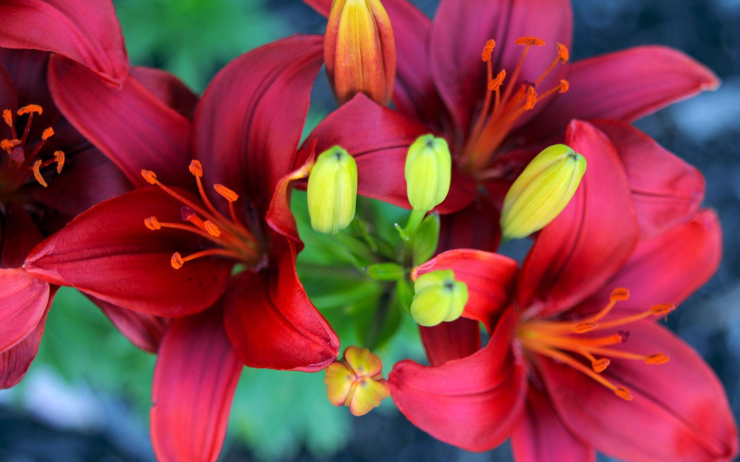 http://www.rabstol.net/uploads/gallery/main/288/rabstol_net_lilies_11.jpg