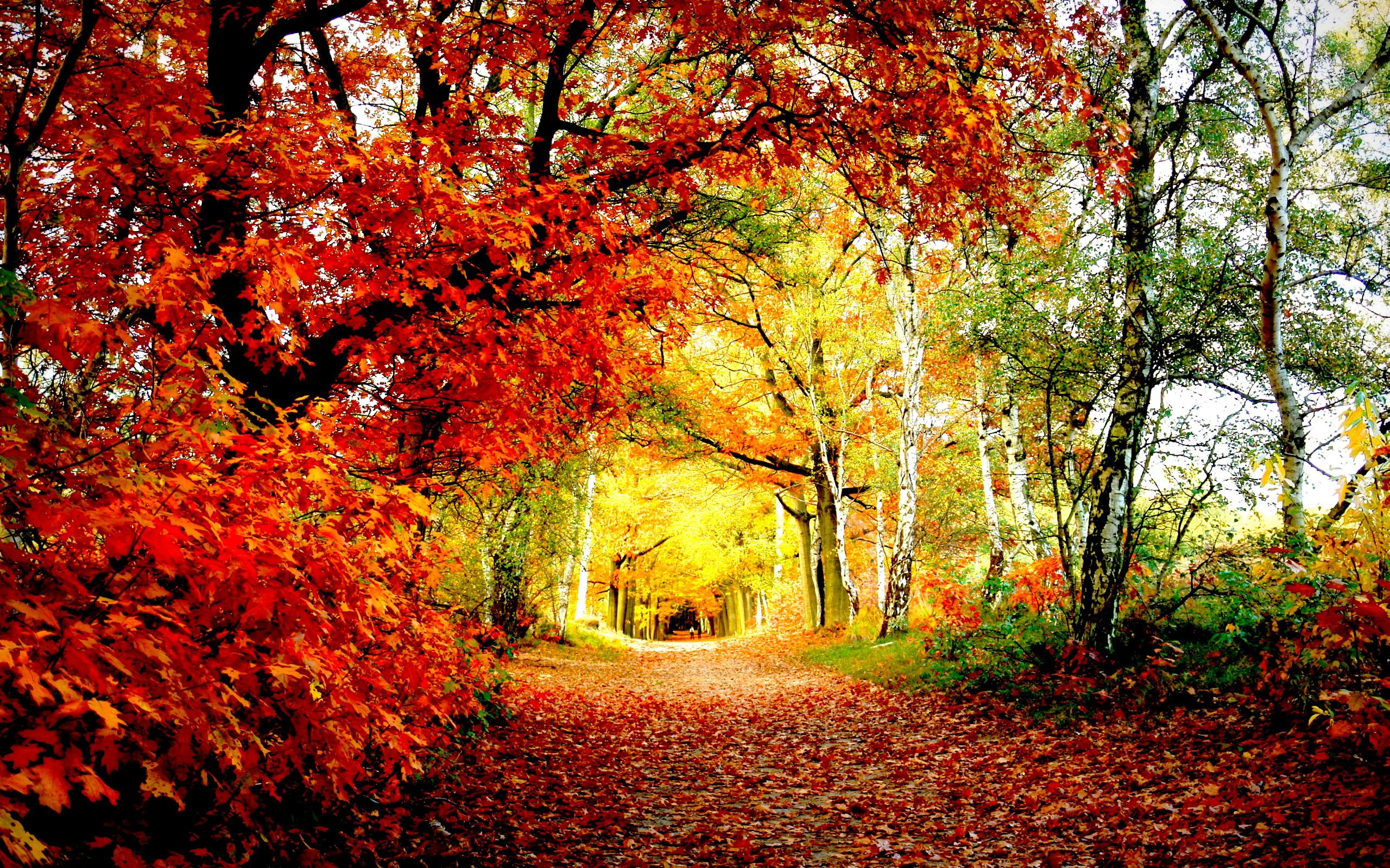 Восеннем лесу фото 469-253