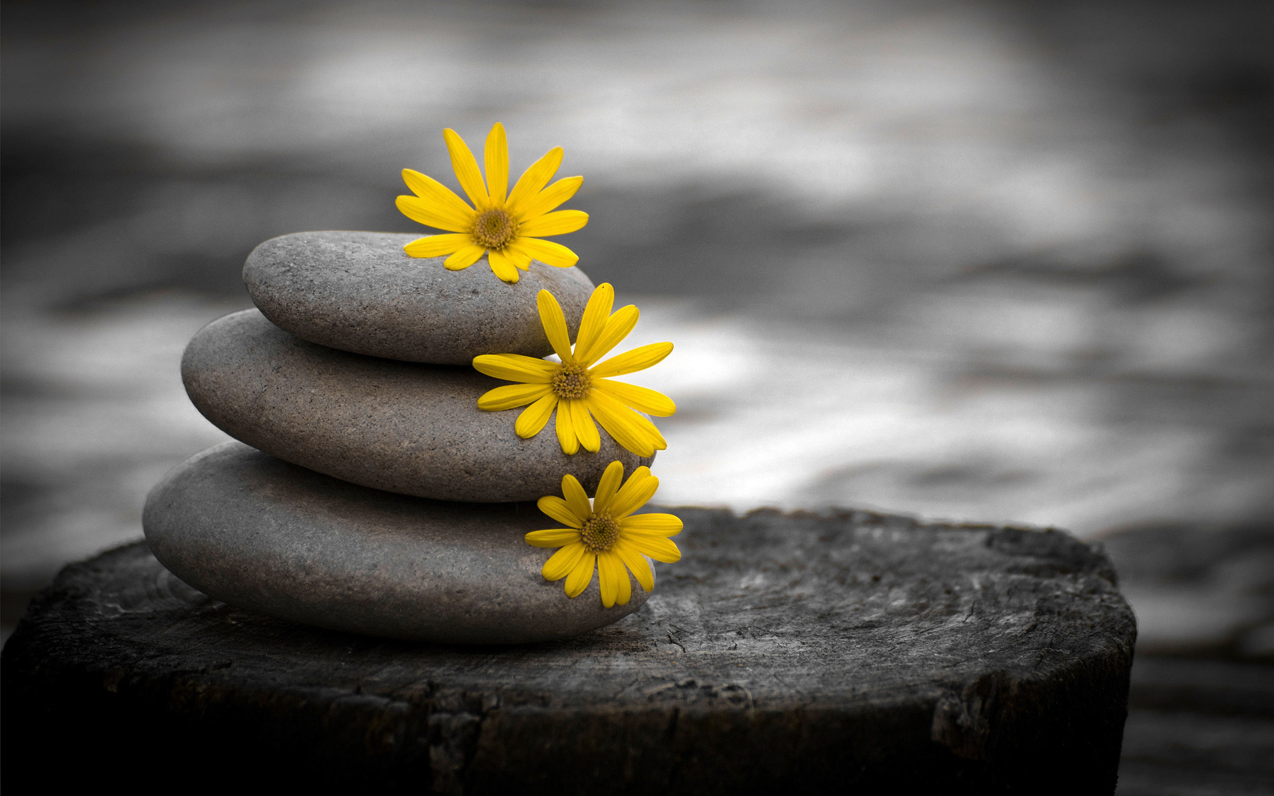 Цветы и камни картинки
