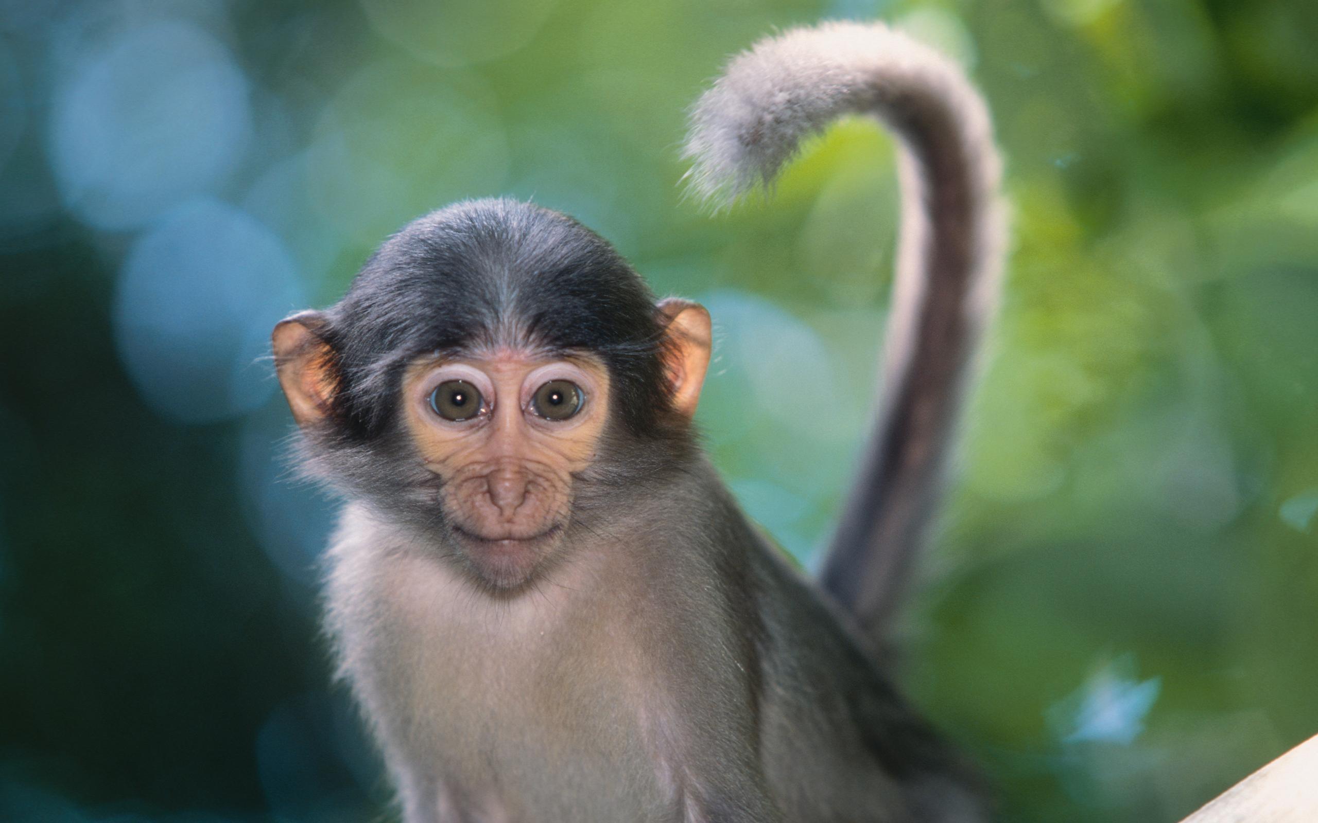 Картинки обезьянка