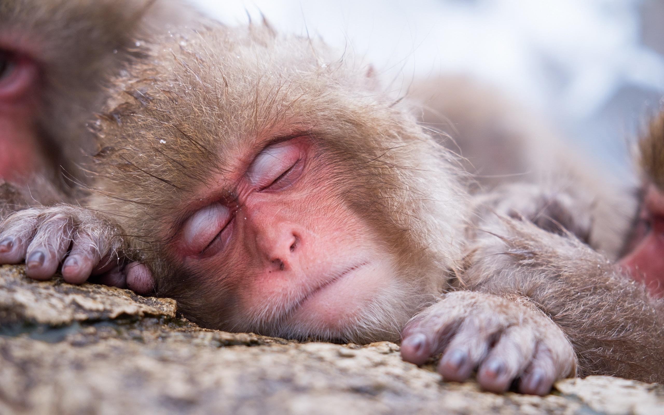 Спорт и спящую 3 фотография
