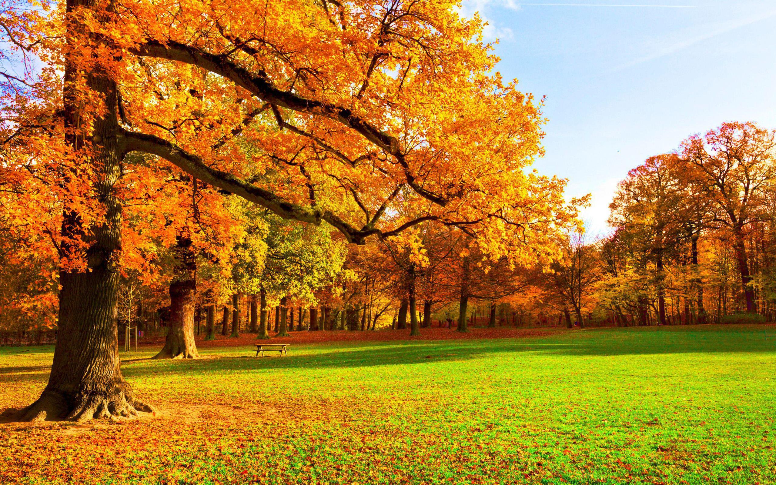 Картинки На Обои Рабочего Стола Осень