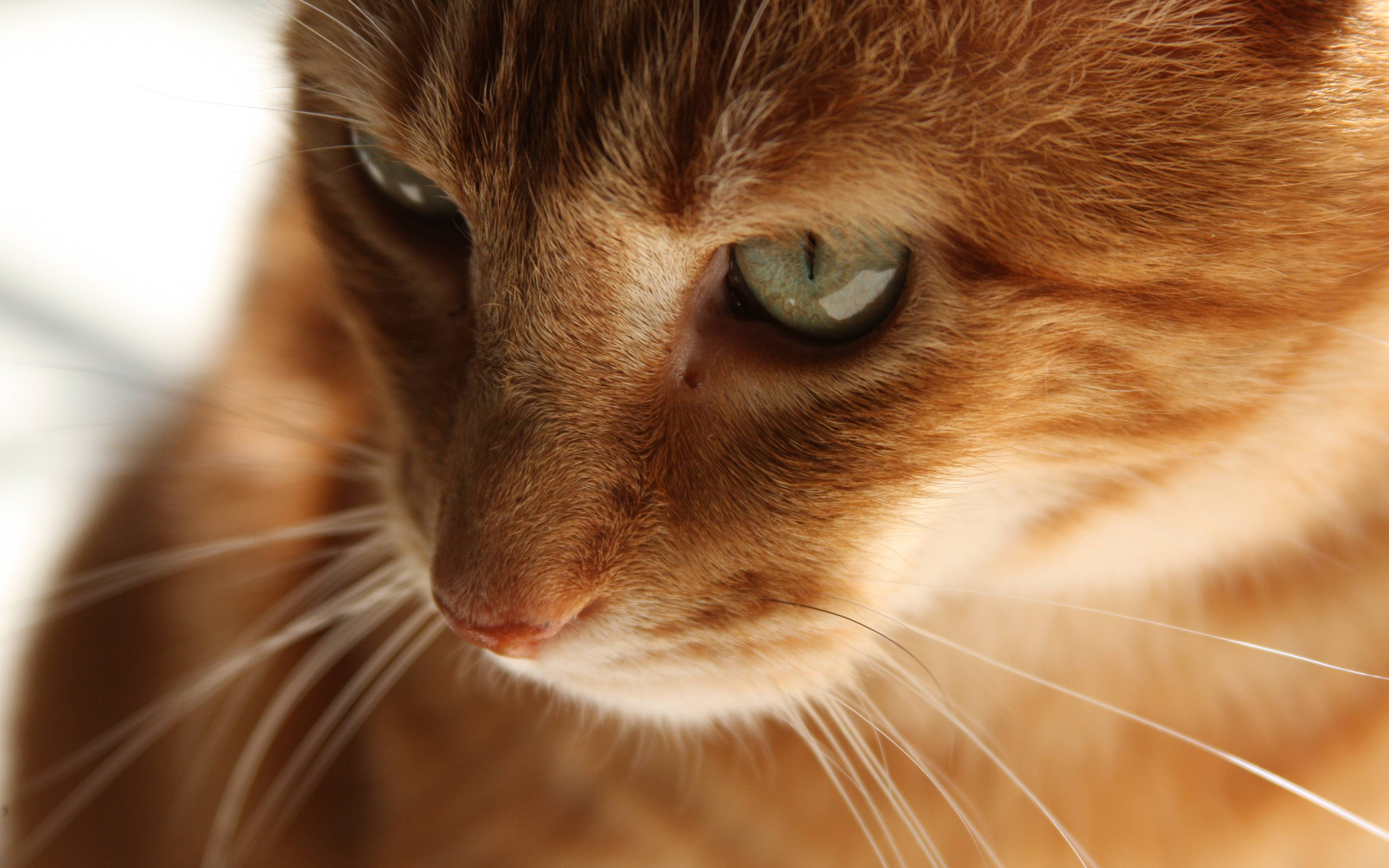 Кот на телефон рыжий кот