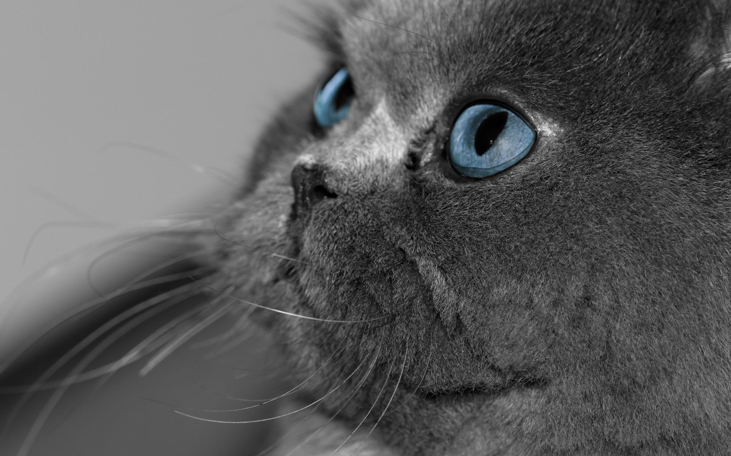 Обои для рабочего стола  Коты  Cats Wallpapers часть 1