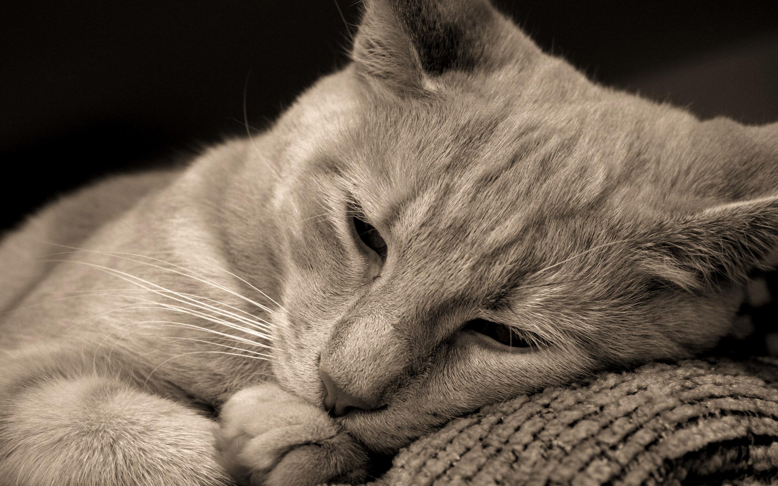 Картинки по запросу грустный кот