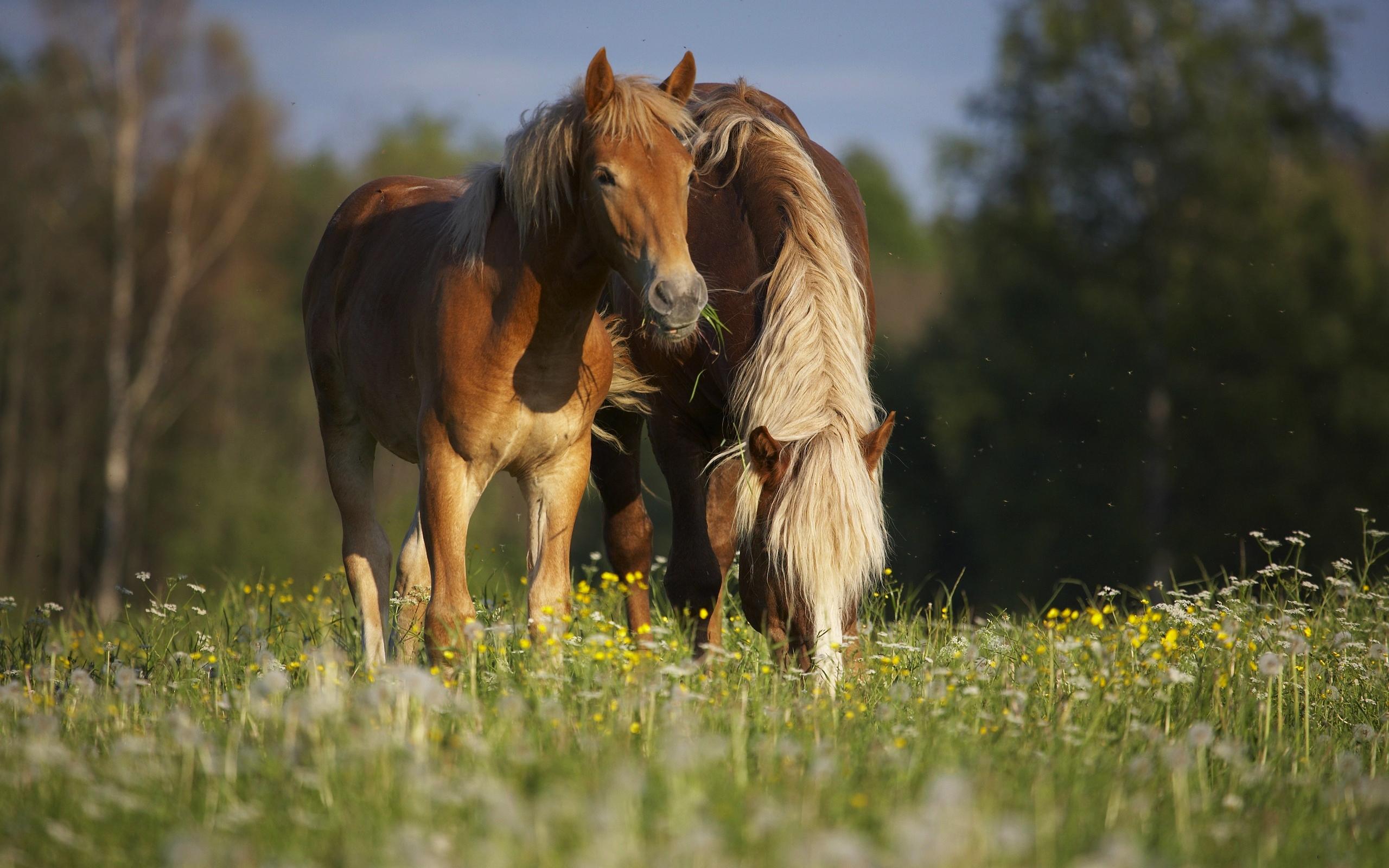 http://www.rabstol.net/uploads/gallery/main/70/rabstol_net_horse_05.jpg