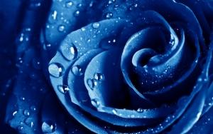 Бутон синей розы