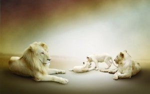 Семья белых львов