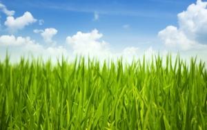 Трава и облака
