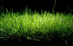 Трава на черном фоне