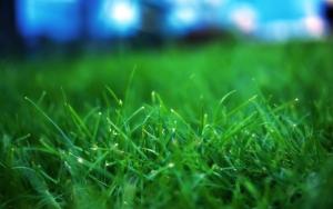 Обычная трава