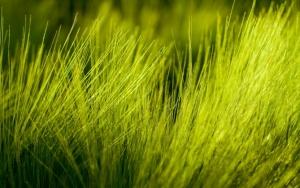 Желтая трава