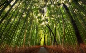 Красивый бамбуковый лес