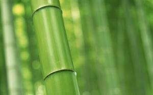 Стебель бамбука