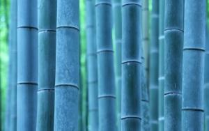Синий бамбук