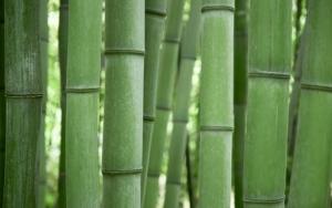 Стебли бамбука
