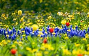 Цветущие цветы