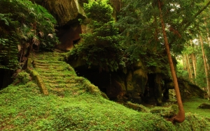 Ступеньки в лесу