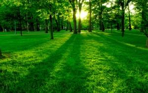 Зеленое лето
