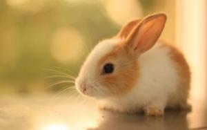 Милый крольчонок