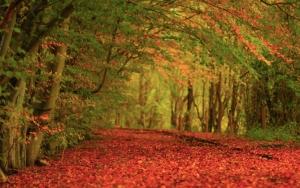Дорога усыпана листвой