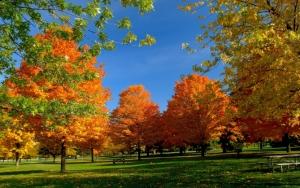 Осенний деревья на зеленой траве