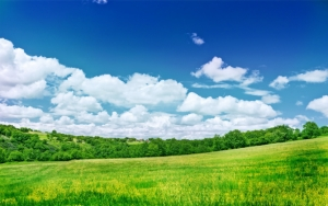 Желто-зеленое поле