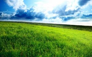 Зеленая трава на поле