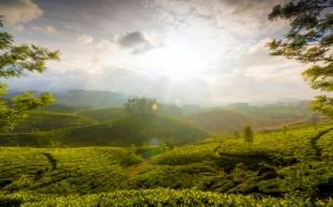 Чайные холмы