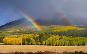 Две радуги над лесом