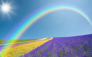 Радуга над цветочным полем