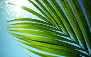 Пальмовая ветвь