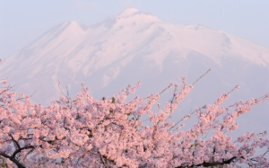 Сакура на фоне горы