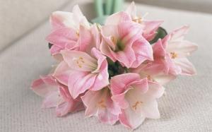 Букет нежно-розовых амариллисов