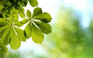 Листья на солнце