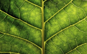 Макро лист