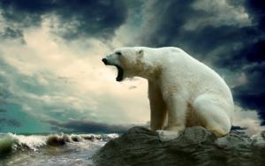 Красивый белый медведь