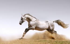 Белый конь
