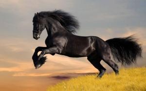 Конь красавец