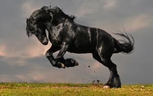 Вороной конь
